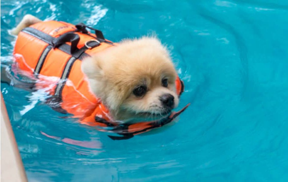 best life jackets for small dogs that you can get