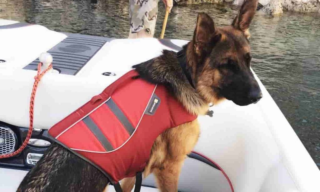A german shepherd wearing life jacket on a boat