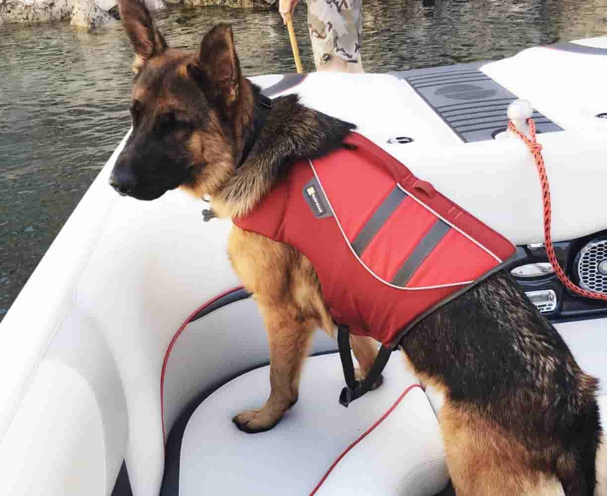 Best life jacket for German Shepherd